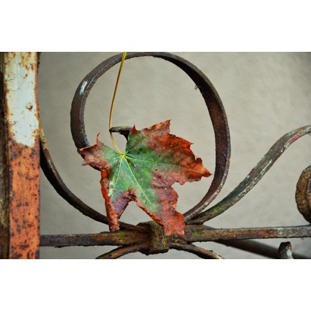 Autumn Rust Pastel (Canvas Print Maple Leaf Autumn Leaf Rusted Fence Iron Withered Stretched Canvas 10 x 14)