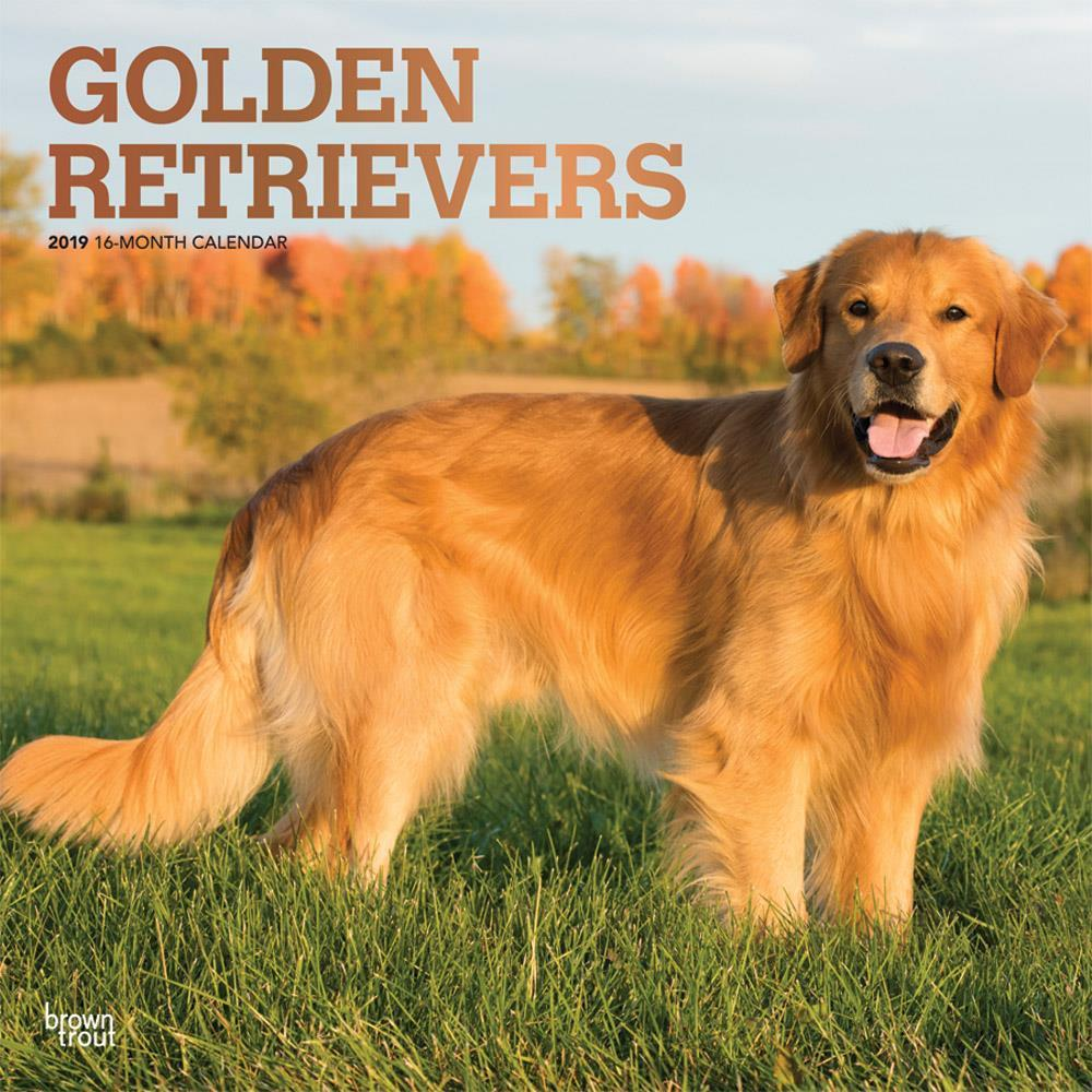 Golden Retrievers 2019 Square Foil (Other)