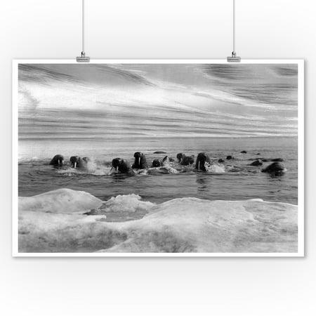 Walrus among the Ice Floes in Bering Sea Alaska Photograph (9x12 Art Print, Wall Decor Travel