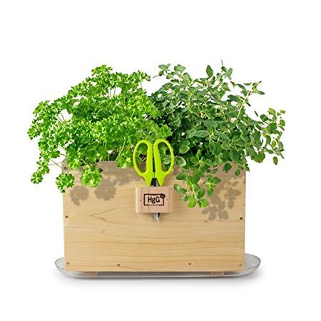Homegrown Gourmet Window Box Planter