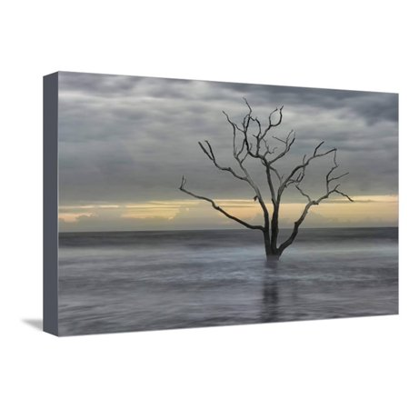 Gray Skies Stretched Canvas Print Wall Art By Danny Head