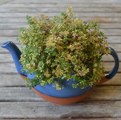 Cs 3 Blue Glazed Extra Large Teapot Planter Walmart Com