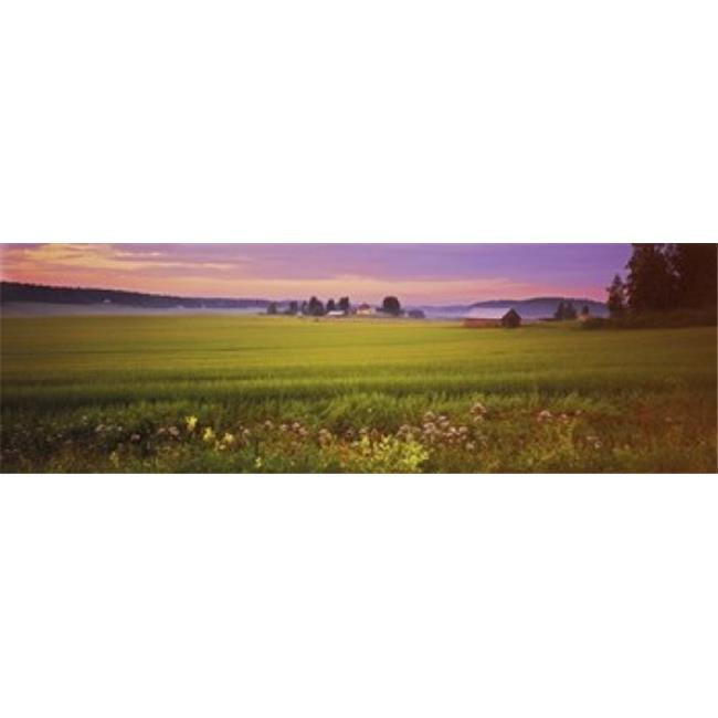 Images panoramiques PPI137122L fleurs sauvages dans un champ Finlande impression d'affiche par images panoramiques - 36 x 12 - image 1 de 1