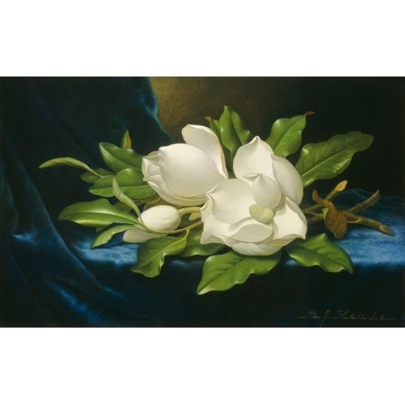 Giant Magnolias On A Blue Velvet Cloth Stretched Canvas -  (24 x 18) ()