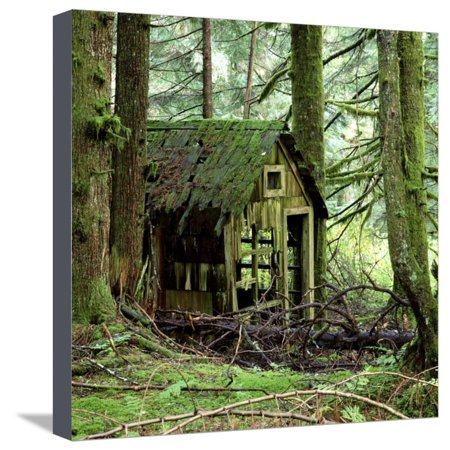 Rotting Wooden Shed Covered in Moss, Washington State, Usa Stretched Canvas Print Wall Art By Mark Taylor