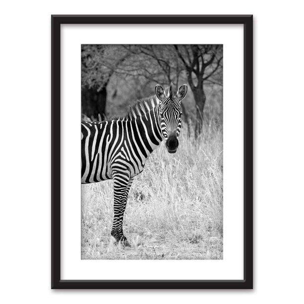 Wall26 Framed Wall Art A Zebra In Black White Black Picture Frames White Matting 23x31 Inches Walmart Com Walmart Com