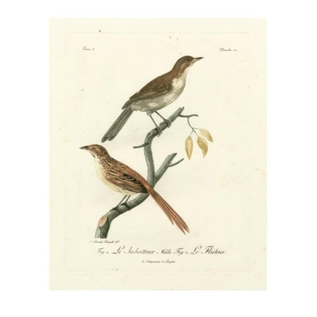 Antique French Birds I Print Wall Art By - Antique French Art