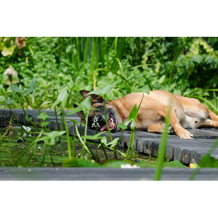 Canvas Print Summer Dog Malinois Race Sweet Garden Stretched Canvas 10 x 14