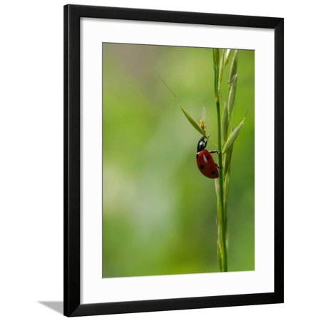 Gr Stem Rutland Uk Framed Print