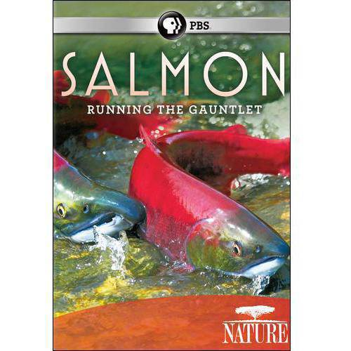 Nature: Salmon - Running The Gauntlet