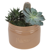 Delray Plants Live 6-inches Tall Cacti and Succulent Garden Indoor Houseplant in Decor Pot