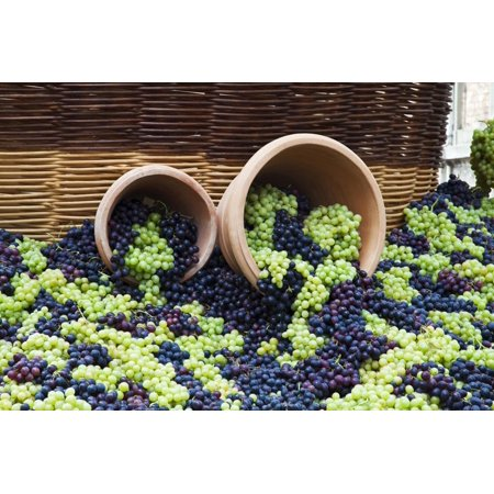Harvest By Terry - Fresh Grapes at Harvest Festival. Print Wall Art By Terry Eggers