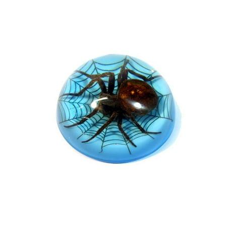 ED Speldy East TC215 Spider On Web Terrain, Blue - Blue Spider Web