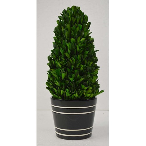 GT DIRECT CORP Tower Boxwood Topiary in Pot