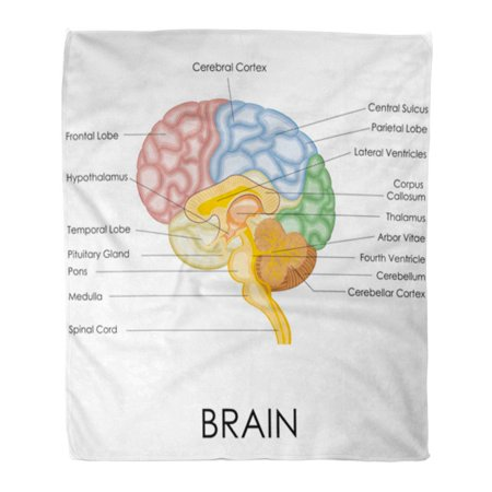Anatomic Bend (ASHLEIGH Throw Blanket Warm Cozy Print Flannel Diagram of Human Brain Anatomy Head Cerebral Comfortable Soft for Bed Sofa and Couch 50x60 Inches )