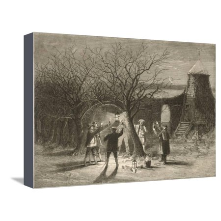 Wassailing Apple Trees with Hot Cider in Devonshire on Twelfth Night Stretched Canvas Print Wall -