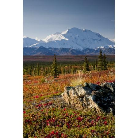 Scenic View Of Mt Mckinley During Autumn Denali National Park Interior Alaska Canvas Art - Lynn Wegener  Design Pics (11 x 17)
