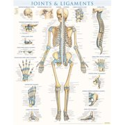 BarCharts 9781423228714 Joints & Ligaments - Laminated Quickstudy Easel