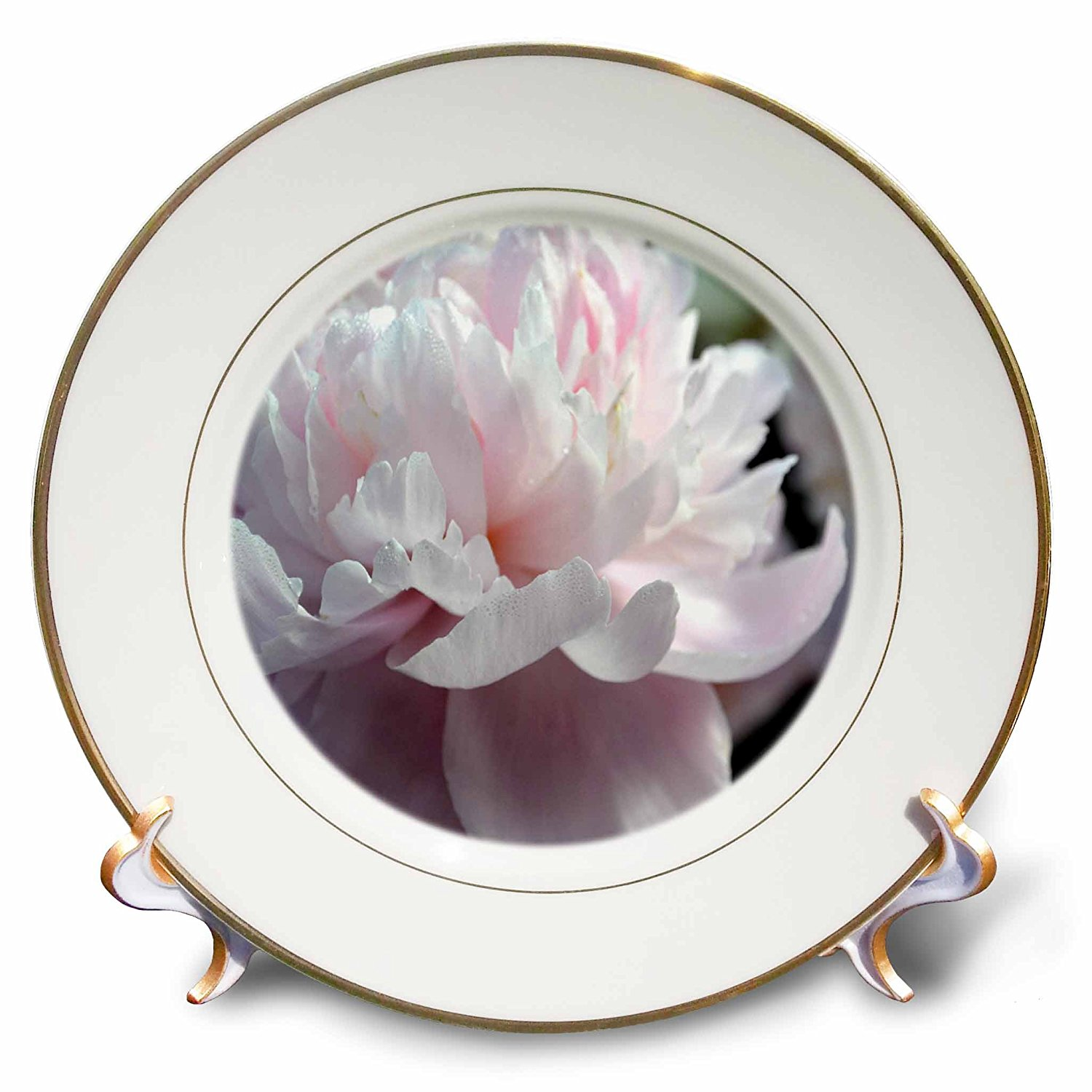 8 3dRose cp/_51022/_1 Soft Pink Peony Flower Porcelain Plate