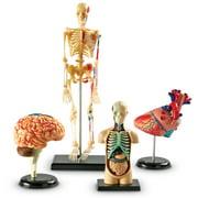 Learning Resources Anatomy Models Bundle Set, Set of 4, Ages 3+