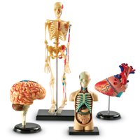 Learning Resources Anatomy Models Bundle Set, Set of 4, Ages 3+