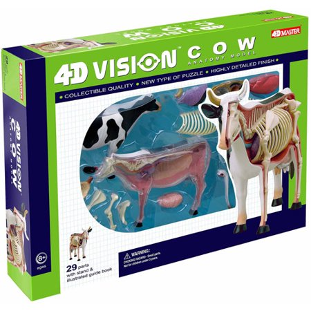 Image of 4D Vision Cow Anatomy Model