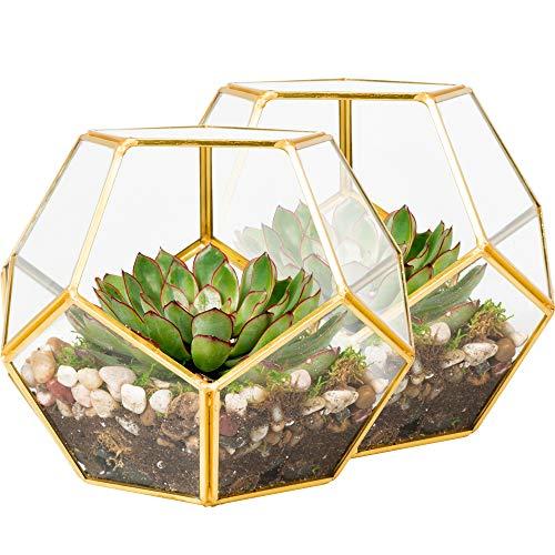 Succulents Eloquent Design Plants KooK Geometric Glass Terrarium Votive Candle Holder Black