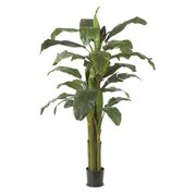 Autograph Foliages P-0660 - 6.5 Foot Banana Palm - Green