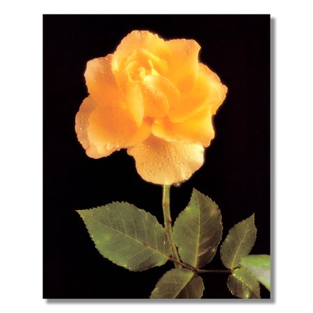 Rain Drops on Yellow Rose Flower with Stem Photo Wall Picture 8x10 Art Print