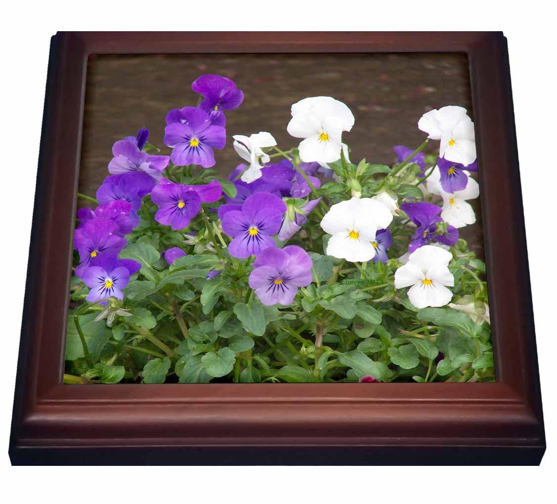 3dRose Violets, Trivet with Ceramic Tile, 8 by 8-inch