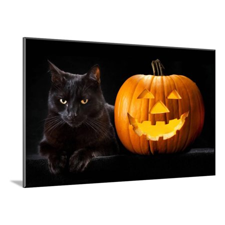 Halloween Pumpkin and Black Cat Scary Spooky and Creepy Horror Holiday Superstition Evil Animal And Wood Mounted Print Wall Art By kikkerdirk - Scary Cat Halloween Pumpkin