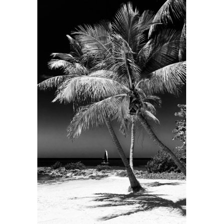 Palms on a White Sand Beach in Key West - Florida Print Wall Art By Philippe (West Palm Beach Airport To Key West)