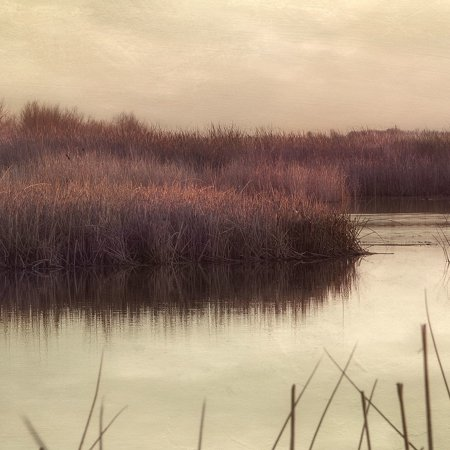 Wetlands Marsh 2 Poster Print by Dianne Poinski