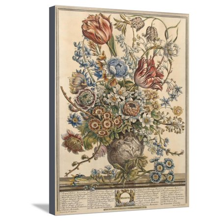 March, from 'Twelve Months of Flowers' by Robert Furber (C.1674-1756) Engraved by Henry Fletcher Stretched Canvas Print Wall Art By Pieter Casteels