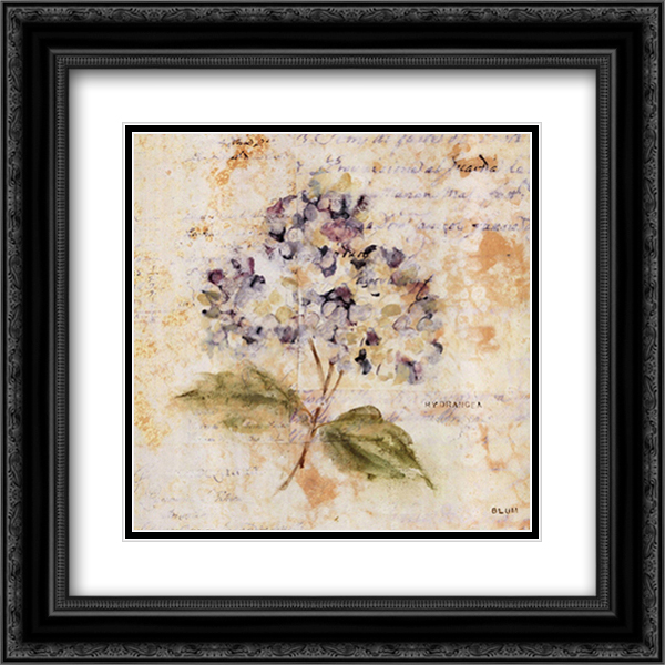 White Washed Hydrangea 2x Matted 16x16 Black Ornate Framed Art Print by Cheri Blum