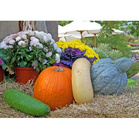 Hand Painted Gourds Halloween (LAMINATED POSTER Gourds Hay Flowers Autumn Fall Pumpkin Halloween Poster Print 24 x)