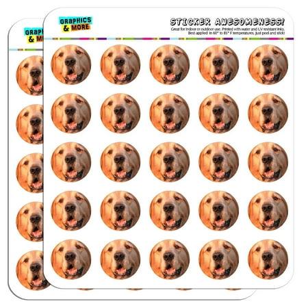 Golden Retriever Dog 1