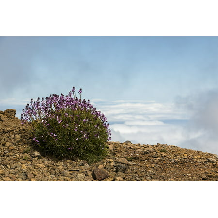 LAMINATED POSTER View La Palma Nature Flower Hiking Canary Islands Poster Print 24 x 36 ()