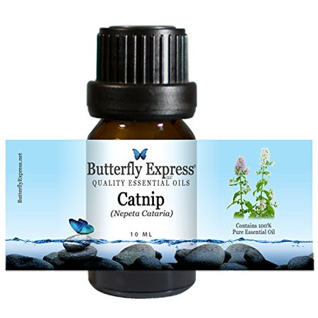 Catnip Essential Oil 10ml - 100% Pure by Butterfly Express