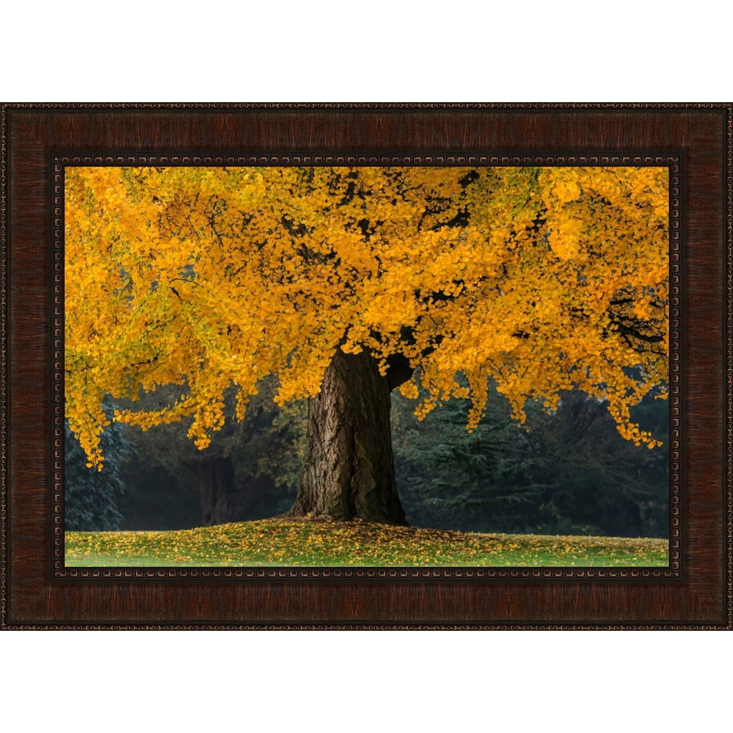 Tangletown Fine Art Golden Biloba, Fine Art Print