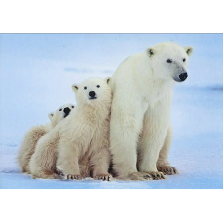 American Greetings Polar Bear with Cubs Box of 14 Christmas Cards