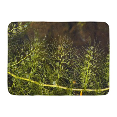 GODPOK Closeup of Bladderwort Leaf Utricularia Vulgaris Carnivorous Plant at Mud Pond in Sunapee New Hampshire Rug Doormat Bath Mat 23.6x15.7 inch ()