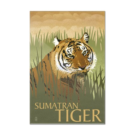 Tigers Lithograph (Sumatran Tiger - Lithograph Series - Lantern Press Artwork (8x12 Acrylic Wall Art Gallery Quality) )