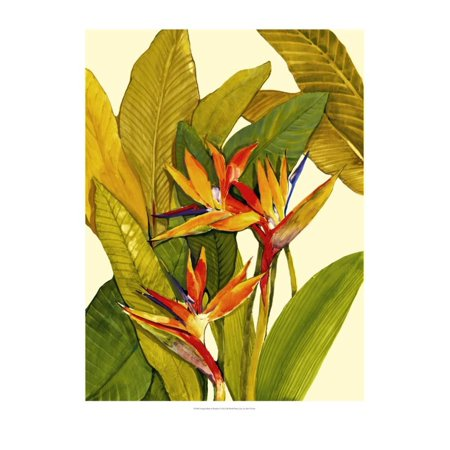 Art Tin - Tropical Bird of Paradise Print Wall Art By Tim O'toole