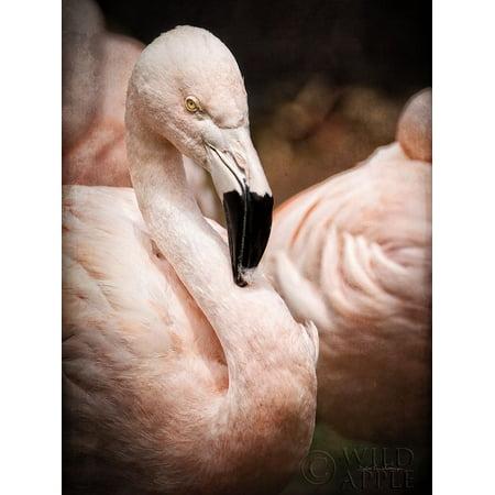Chilean Flamingo II Poster Print by Debra Van Swearingen