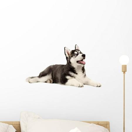 Siberian Husky Puppy White Wall Mural Decal Sticker, Wallmonkeys Peel & Stick Vinyl Graphic (18 in W x 14 in H)