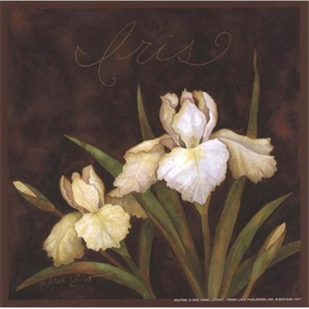 TPC/PEN P12ALP306 Midnight Iris Poster Print by Annie Lapoint - 6 x 6 - image 1 of 1