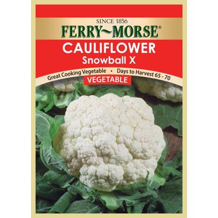 Vegetable seed Cauliflower-SnowballX