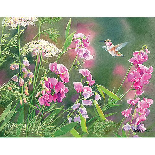 Boxed Note Cards, Wild Sweet Pea