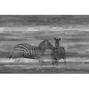 Parvez Taj Zebra Romp